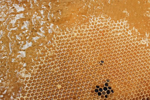 bee-honeycomb