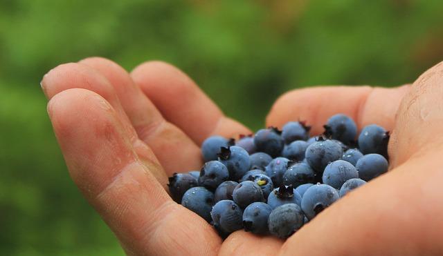hands-blueberries