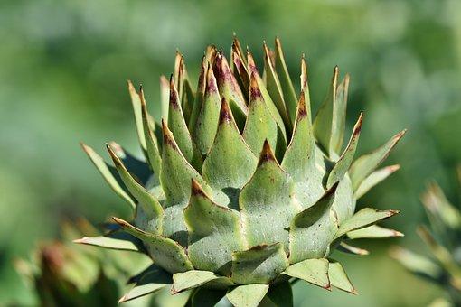 artichoke-ump