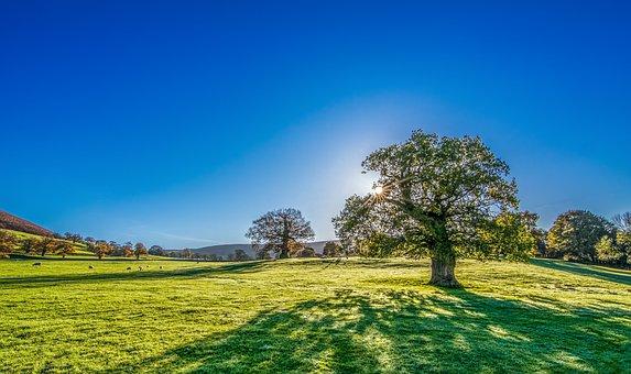 sunshine-trees