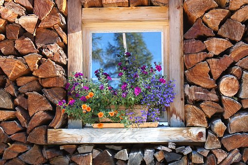 window-stock-flowers